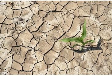 Laudato si: como cuidar da criação – Encíclica Ecológica