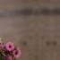 7 atos de fé para ficar em sintonia com o Ano Jubilar Mariano